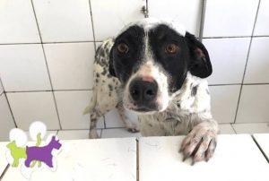 Banho e tosa Pet no Xaxim em Curitiba